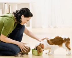 Kŕmenie psíka