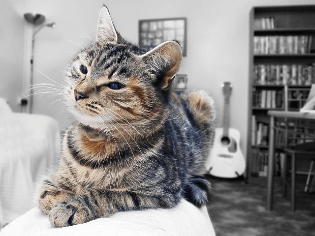 Mačka v domácnosti