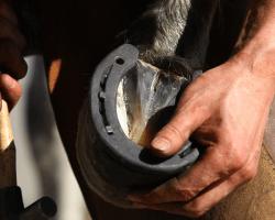 Starostlivosť o kopytá koní