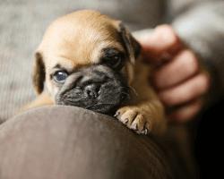 Malé šteniatko odpočíva
