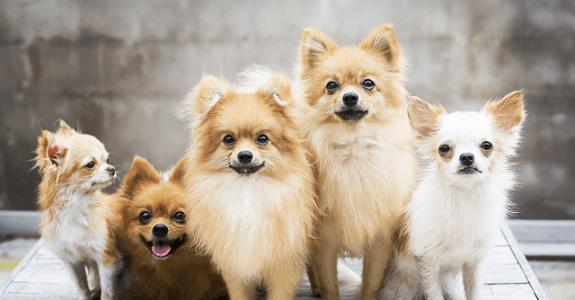 Malé psíky spolu
